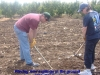 Placing new saplings in the ground - Iyyar 5772 planting