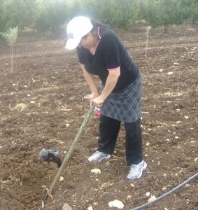 Planting the ground - Iyyar 2012