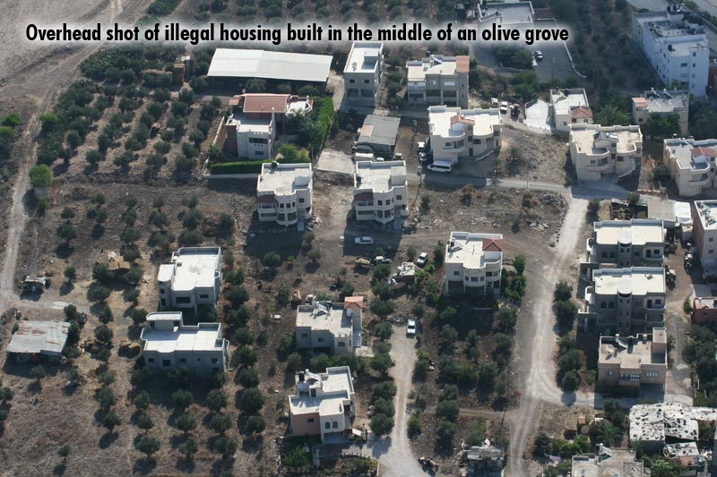 Overhead shot of illegal housing built in the middle of an olive grove