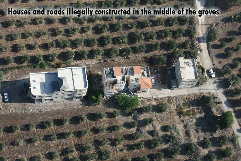 Houses and roads illegally constructed in the middle of the groves.