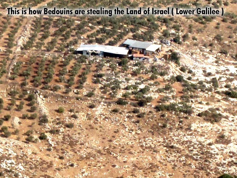 This is how Bedouins are stealing the Land of Israel ( Lower Galilee )