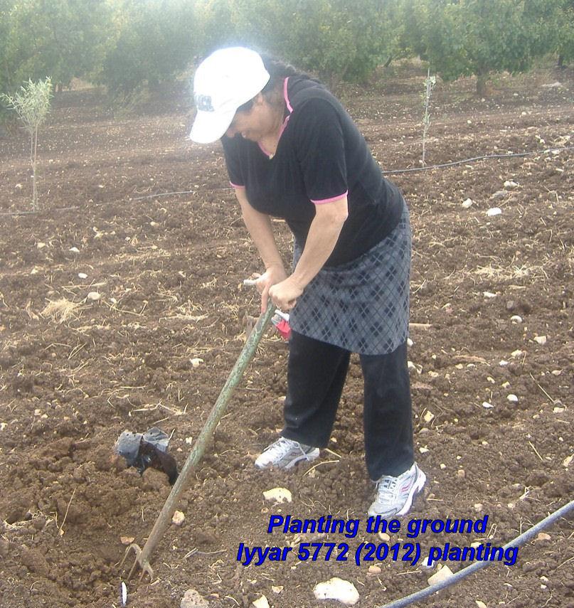 Planting the ground - Iyyar 5772 planting