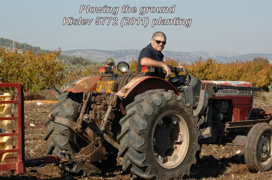 Plowing the ground - Kislev 5772 planting