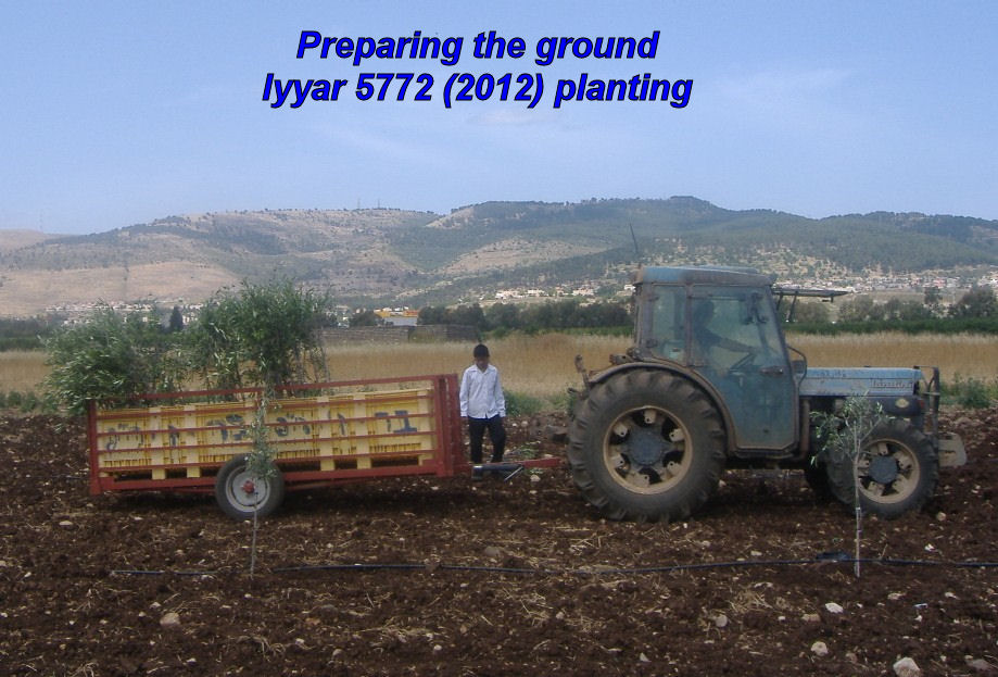 Preparing the ground - Iyyar 5772 planting