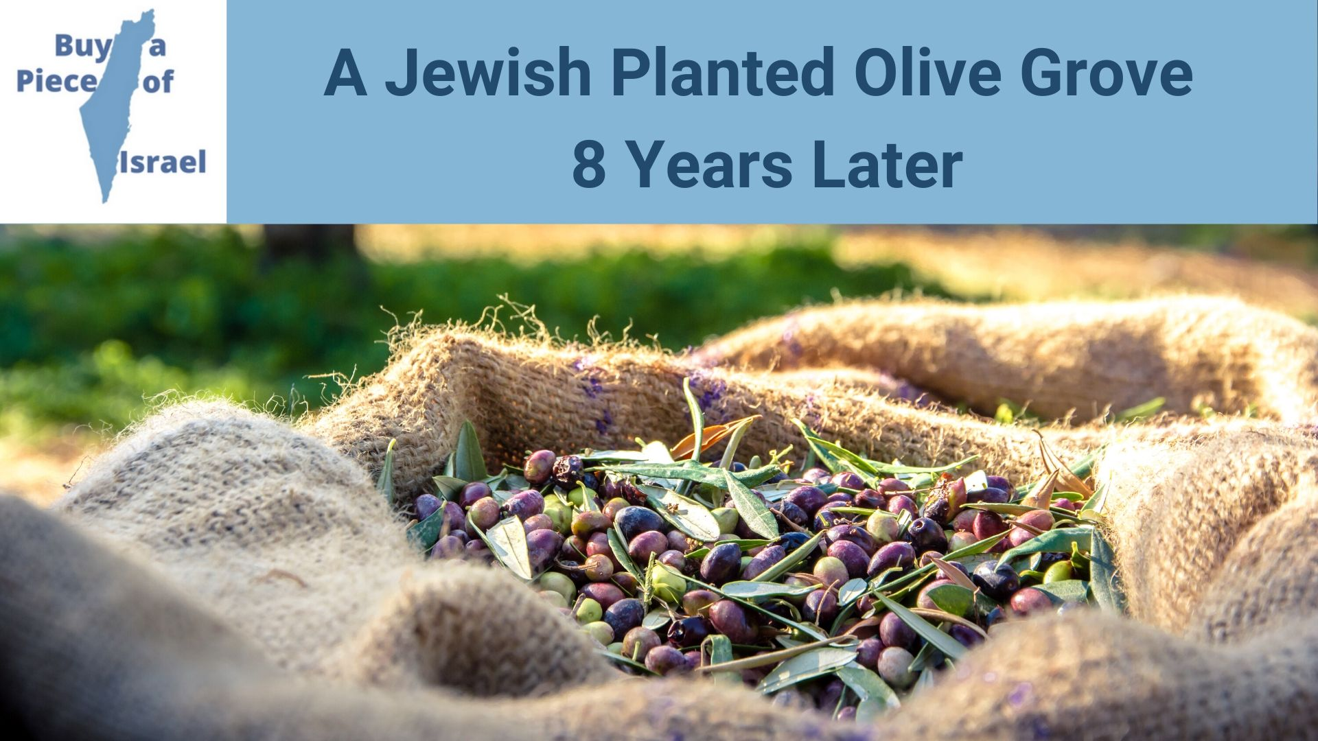 Olive growth