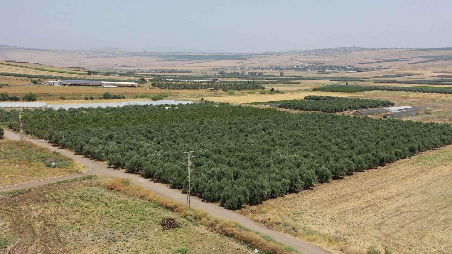Real Estate in Israel